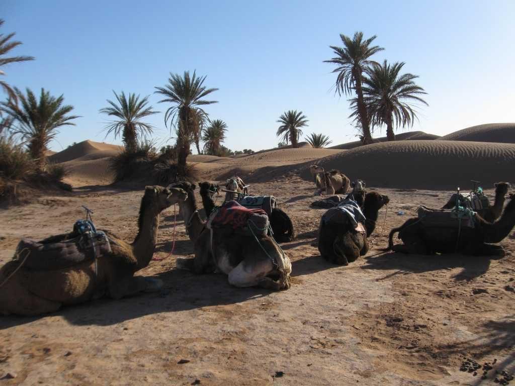Woestijn wandelen en yoga