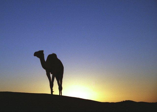 Sahara wandel trektocht ResetT – jongeren met een uitdaging – Kerstvakantie