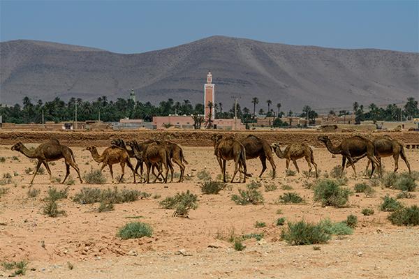 Dag 1 - Natuur / cultuur rondreis Zuid-Marokko vanuit Agadir 50+