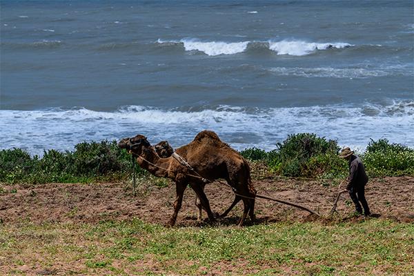 Dag 7 - Natuur / cultuur rondreis Zuid-Marokko vanuit Agadir 50+