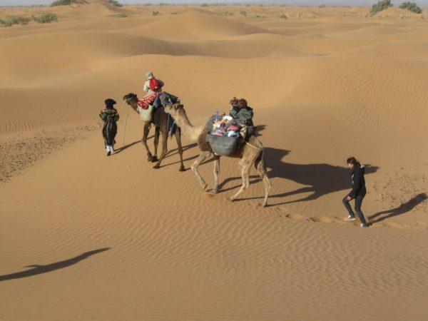 woestijntocht met kamelen